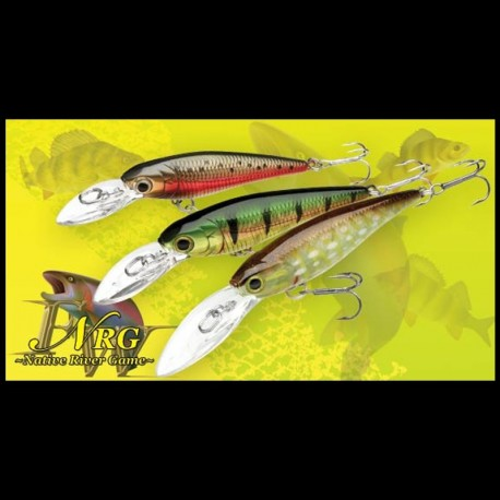 Bevy Shad 50 sp